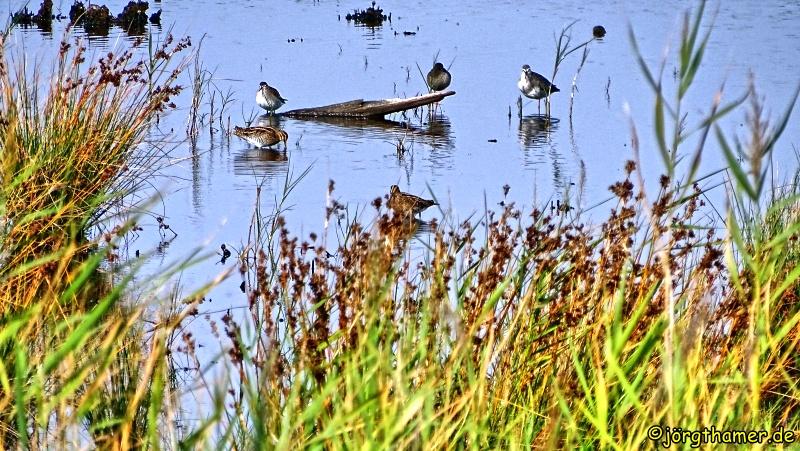 Vögel im Fischland-Darß-Zingst
