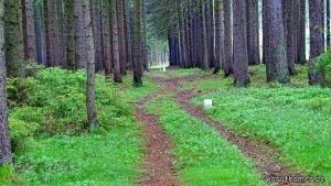 Deutsch-Tschechische Grenze bei Neualbenreuth