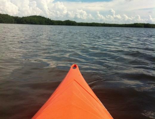 kayaking weedon island