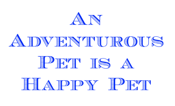 pet adventure