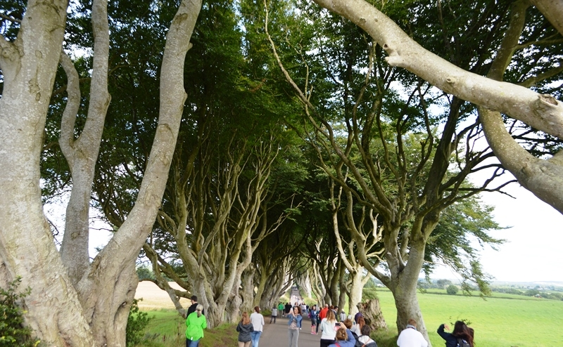 Dark Hedges on a Northern Ireland tour from Dublin