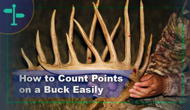 How to Count Points on a Buck