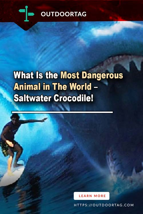 What Is the Most Dangerous Animal in The World – Saltwater Crocodile!