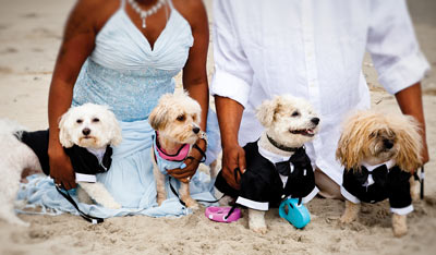 dogs dressed up at wedding