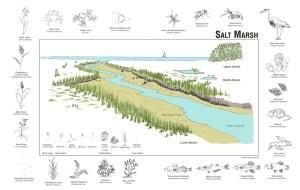 Salt Marsh  Outer Island