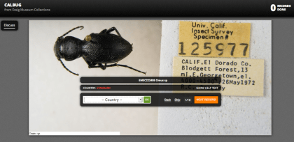 The Calbug user interface on the Notes from Nature site asks volunteers to transcribe hand-written information about where and when various insect and spider species were collected.