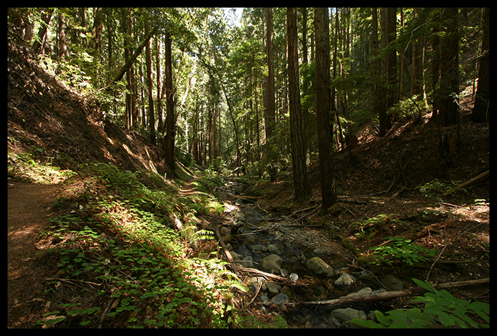 Redwood forest canyon, Felton, California. H Grimes, Flickr