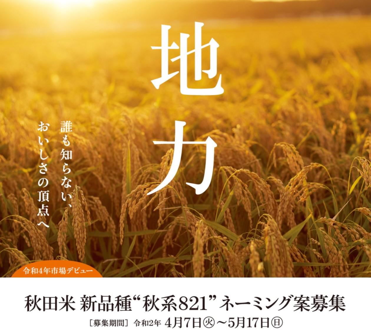 >秋田の新品種のネーミング公募