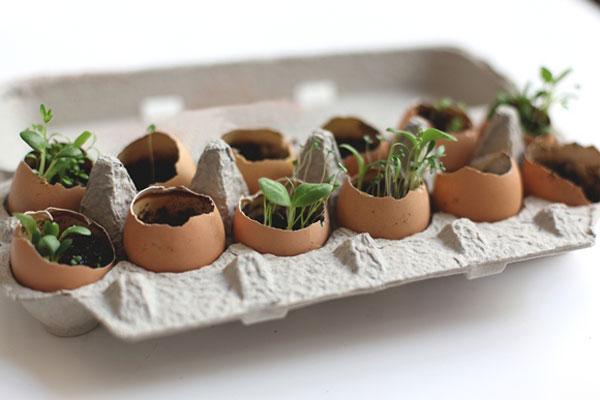 egg-crate-garden