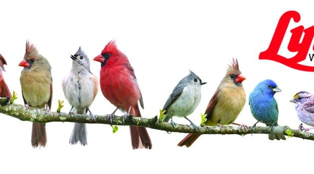 Why Feature Lyric Wild Bird Food?