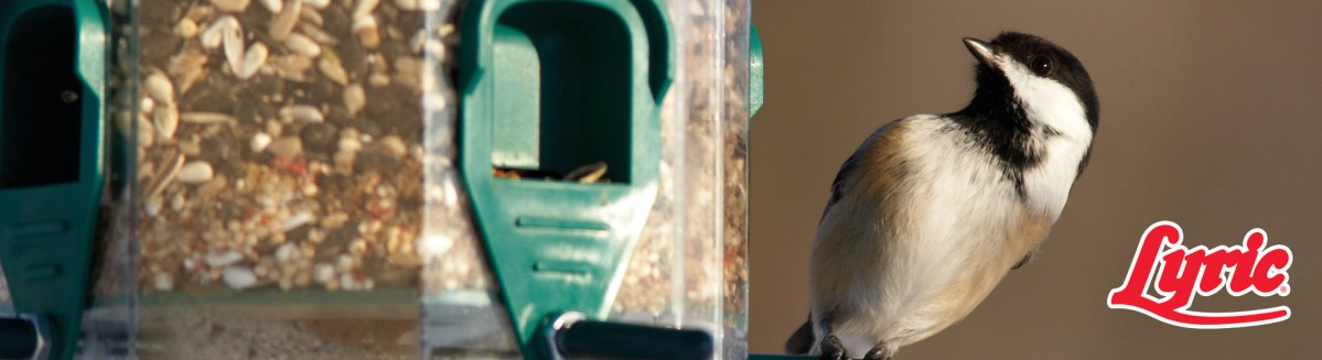 Winter Tips For Your New Bird Feeder Customers