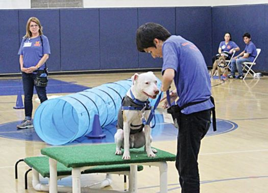 Photo courtesy Boys & Girls Club A Boys & Girls Club member displays his dog-training skills at an obstacle course with a shelter dog named Dodger. The K9 Youth Alliance nonprofit provides the dogs for students to train in a vocational program.
