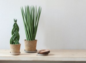 Better than plastic! Biodegradable houseplant pots.