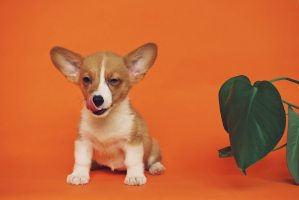 How to build a luxurious space for your puppy.