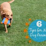 6 Tips for New Dog Parents