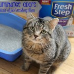 The Coolest Cat Gets a New Litter #FreshStepFebreze