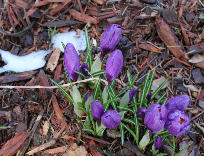 Surviving the Snow – Flower Friday