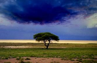 Etosha.rain