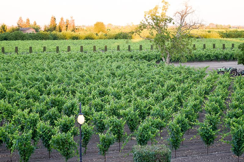 Loving Lodi California Wine Country