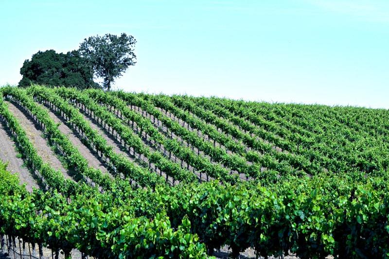 Santa Ynez Valley's Foxen Canyon Wine Trail