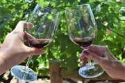Savoring Grapes: Napa Valley