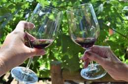 Napa-Valley-Wine