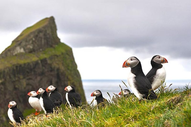 bird-watching-islanda-isole-faroe