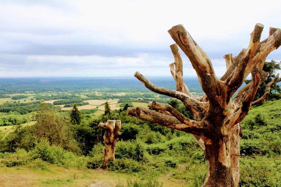 A Day Trip to Surrey Hills