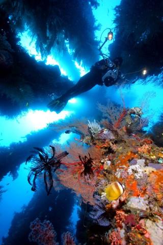 underwater_phil_dive