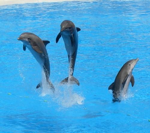 Dolphins at Loro Parque