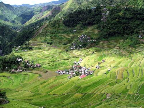 rice fields philippines