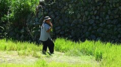 Rice Farmers in Bay-yo