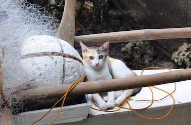 Beautiful Cat at the Port