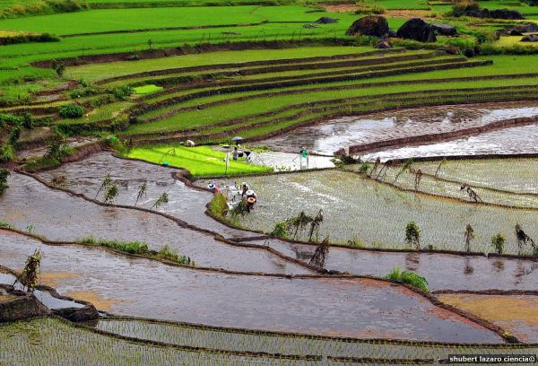 Nagacadan Rice Terraces by Shubert Ciencia via Wikipedia Commons