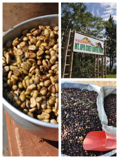 Coffee Production in Davao