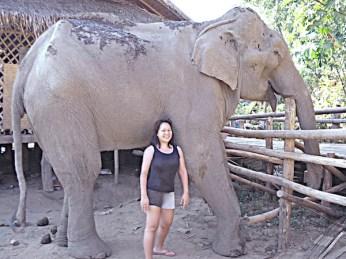 Volunteering in Elephant Sanctuary in Chiangmai Thailand