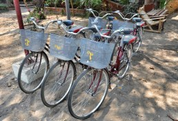 Bike for Rent