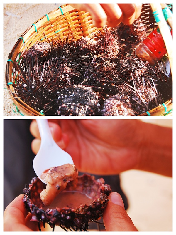 Sea Urchin for sale in Mantigue Island