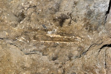 Fossilized human bone inside the cave