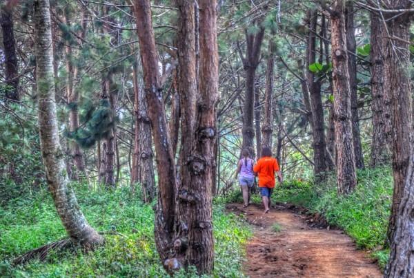 Walking under the huge pine trees