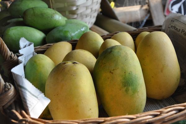 Zambales Mango - Worlds Sweetest Mango