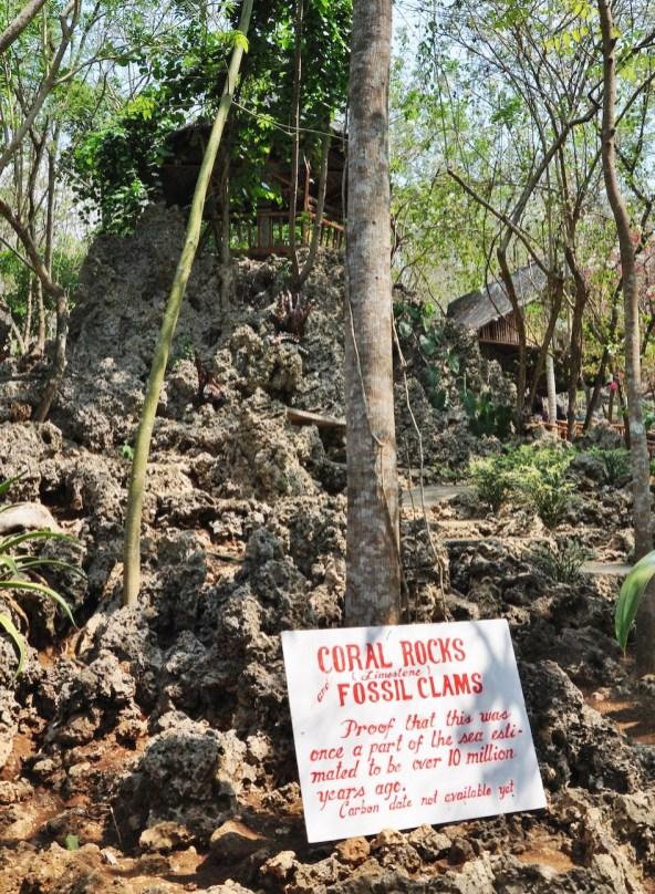 Coral Rocks at Enchanted Cave