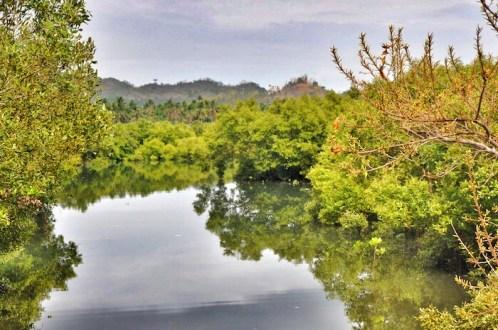 8 Beautiful Mangrove at the Looc Port