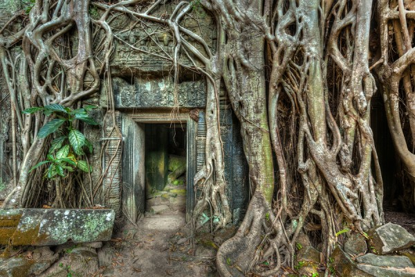 Travel Cambodia ancient stone door and tree