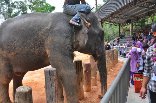 Elephant interacting with the audience