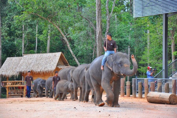 Elephants marching in front of the audience