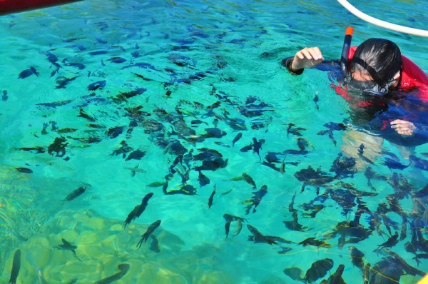 Fish Feeding at the Coral Garden