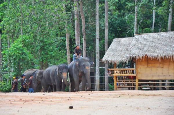 Elephants approaching the viewing area