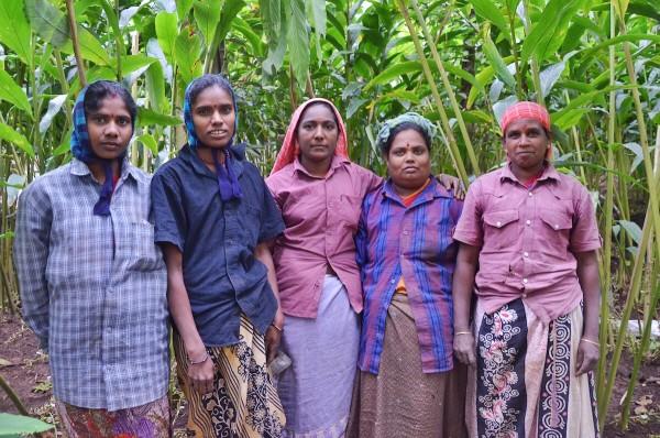 Cardamom spice farmers
