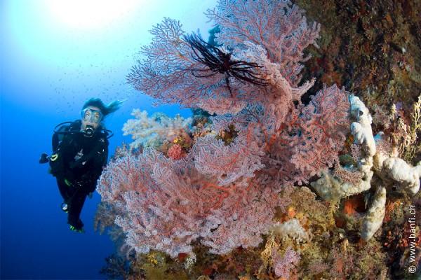 Diving in Bohol by diversiondivetravel.com